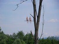 Baumkunst bei Bottingen